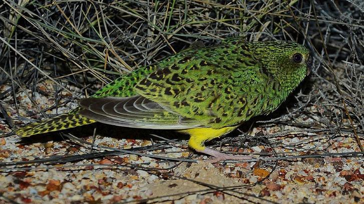 A gyanú szerint kitömött madárról készített 2013-as fotó