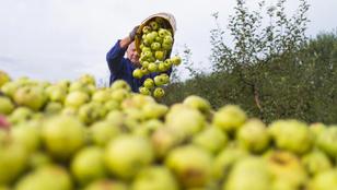 Csökkent a magyar agrárexport