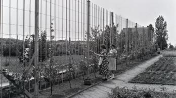 Menő modern villakertek a világháború előtti Magyarországon