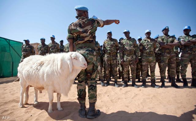 Szenegáli ENSZ békefenntartók kabala juhukkal Khartoumtól nem messze
