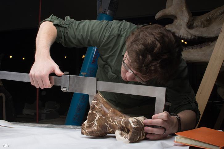 Dr W. Scott Persons méri Scotty csontvázának egy darabját az Alberta Egyetemen.