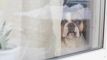 A szorongó kutya a gazda szorongását jelezheti
