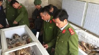 Lefagyasztott tigriskölykök tetemeit foglalták le Vietnámban