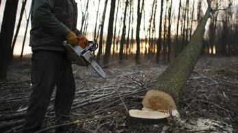 Engedélyhez kötik a fakivágást magánterületen is a II. kerületben