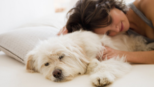 Ezért jó a kutyával aludni