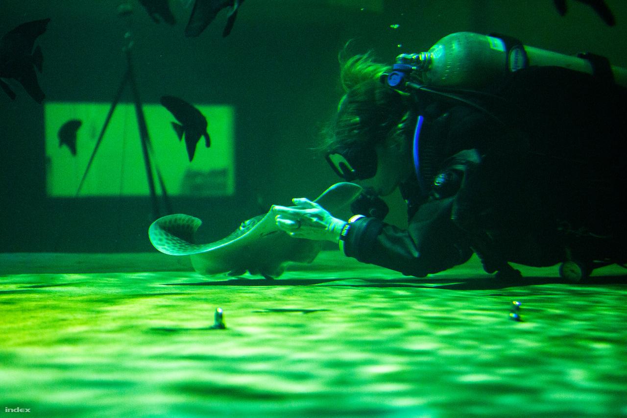 A cápasuliban nevelkednek azok az állatok, akik a Biodom átadása után annak kétmillió literes akváriumában élnek majd. A cápák, és a ráják kicsit olyanok, mint a macskák: ha olyanjuk van, tudomást sem vesznek az emberről, de ha igénylik a cirógatást, odaúsznak a gondozó ölébe és hagyják magukat simogatni.