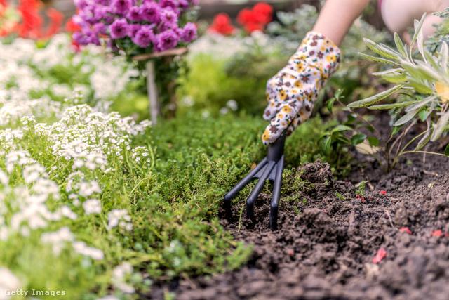 Éljen a gyomlálás és a kertrendezés!