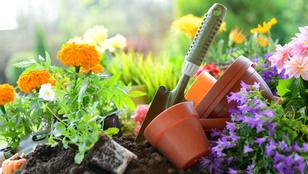 Ezek a legfontosabb tavaszi teendők a kertedben
