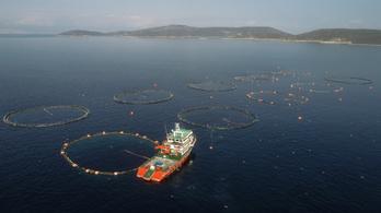 Hálózatelmélet magyarázza a túlhalászat veszélyeit