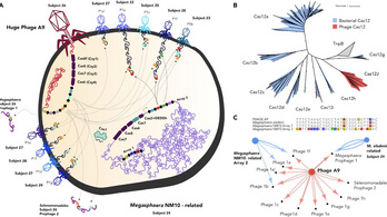 Az óriásvírusok a baktériumok védelmi rendszerét lopják el