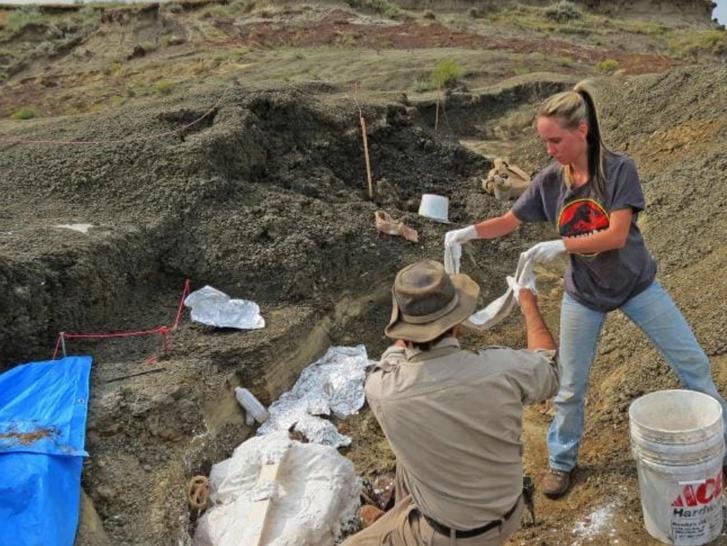 Robert DePalma (háttal) az ásatáson Jurassic Park-os pólós asszisztensével