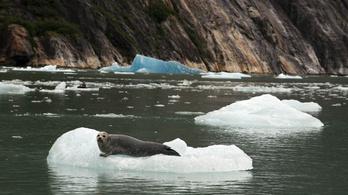 20 fokkal van melegebb Alaszkában, mint szokott