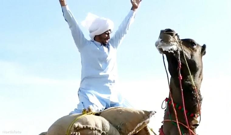 Íme, a győztes pillanat, amikor a legnagyobb teherbírású teve gazdája,Qasim  a magasba emeli a kezét