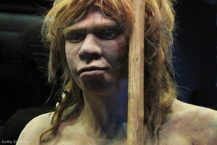 Neandervölgyi nő rekonstrukció, a Sidon barlangban talált csontok alapján a madridi Nemzeti Archeológiai Múzeumban