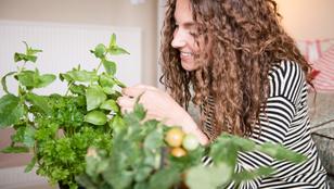 Így termessz fűszernövényeket a konyhádban