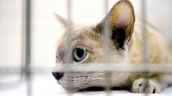 Az amerikai mezőgazdasági minisztérium nem gyilkol több cicát