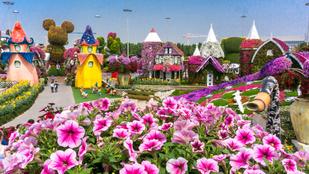 Virágszobrok a sivatag közepén, a világ legnagyobb kertjében
