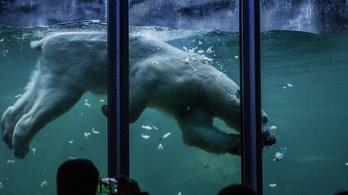Az éjszakai állatkert titkai
