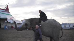 Félelem és rettegés: Gáspár Győző felült egy elefántra