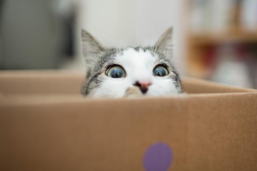 A macskák dobozok iránti vonzalma nem más, mint természetes vadászösztön. A félreeső zugokból ugyanis sokkal könnyebben becserkészik áldozatukat.