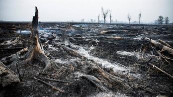 300 hektár nád égett le Fonyódon, az összes hüllő elpusztult