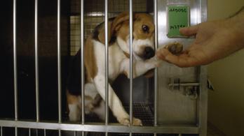 Az állatkísérletek állatok millióit ölik meg. És ez nem baj