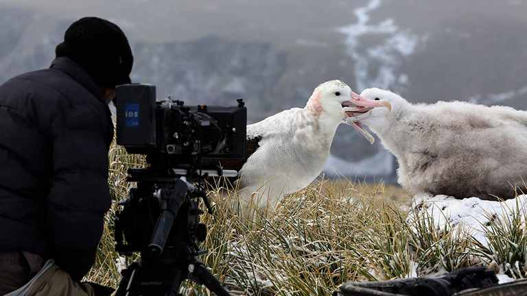 Pofonokat ad és álomvilágba repít Attenborough új sorozata