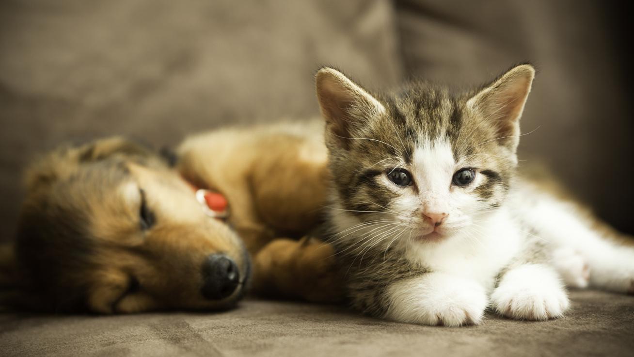 cover-kutya-cica