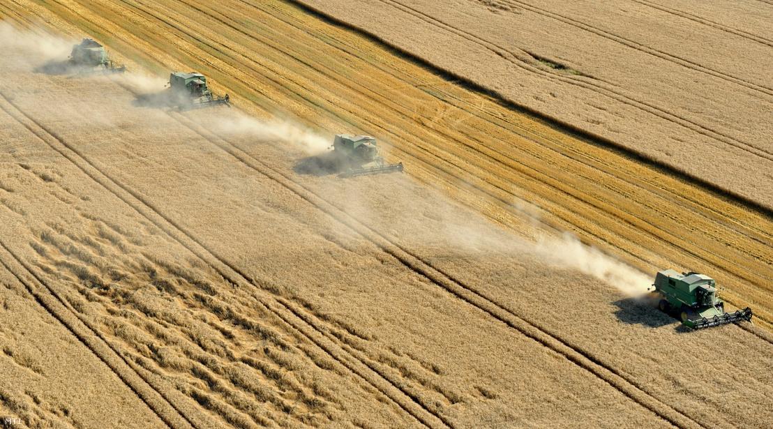 Kombájnok aratják a búzát a Fejér megyei Enying határában, 2009. július 13-án.