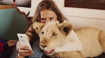 Az oroszlán családtagokként tekint a gyerekekre