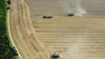 Egymillió tonna gabonát vihet el az aszály