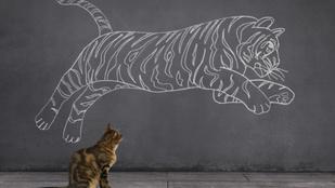 Óriási tehetség vs. rengeteg gyakorlás: Mi kell valójában a sikerhez?
