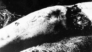 A tetovált kar, amit két cápa is lenyelt, aztán gyilkossági ügy lett belőle