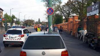 Egy fehér póniló rohangált Szeged belvárosában