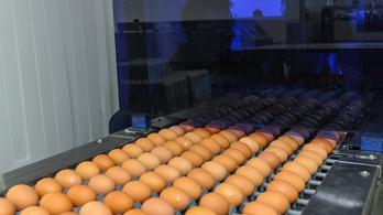 Hiába a húsvét, nagy bajban vannak a tojástermelők