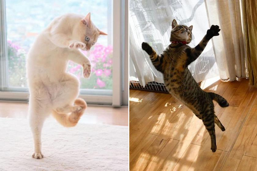 Zseniális képek macskákról, akik nem is sejtették, hogy fotózzák őket