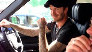David Beckhamet elmeszelték, hogy mobilozott a Bentley-jében