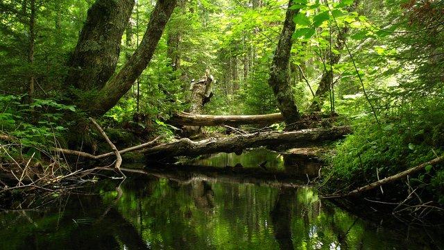 Víz az erdő mélyén