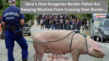 Az az álhír terjed a neten, hogy a magyarok disznóval védik a határt a muszlimoktól
