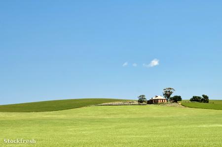 stockfresh 214820 farm-has-fields-of-wheat sizeM