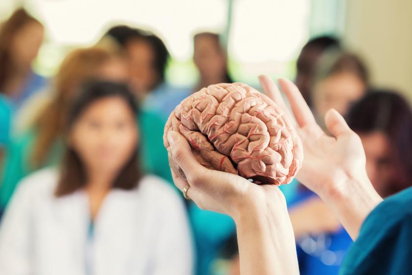 Idő kérdése, és életben tarthatják a testen kívüli emberi agyat: egy bizarr kutatás eddigi eredményei