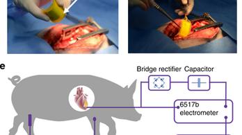 Szívverés energiájával működő pacemakert ültettek sertésekbe