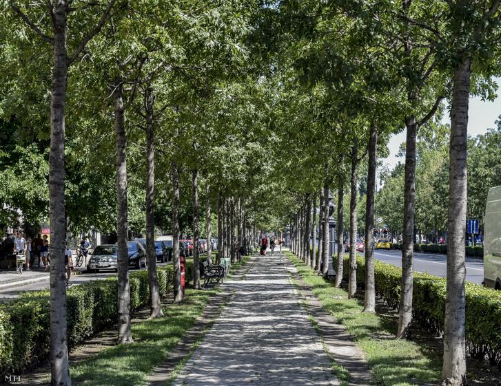 Az Andrássy út fasora a Bajza utcánál.
