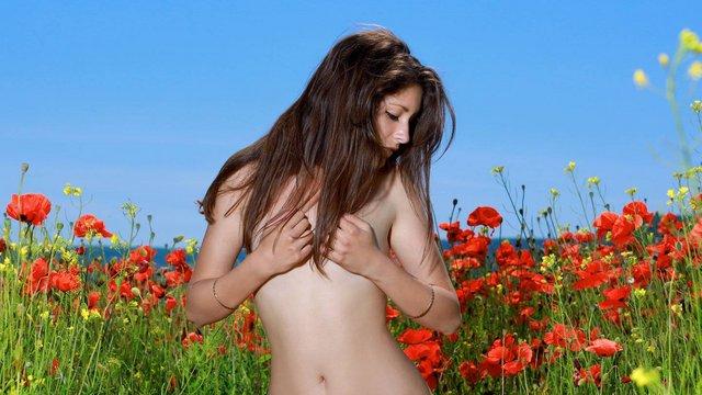 Pucér virágszál a pipacsmezőn
