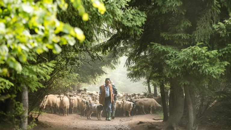 A biodiverzitás kulcsa a pásztorok kezében van