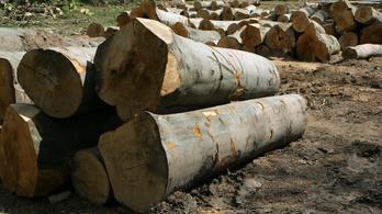 12 millió hektár trópusi erdő tűnt el tavaly
