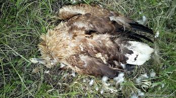 Megmérgezett állatok tetemét találták meg Tolnában
