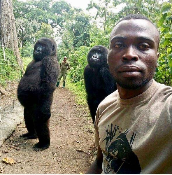 Forrás: Virunga Nemzeti Park / Instragram