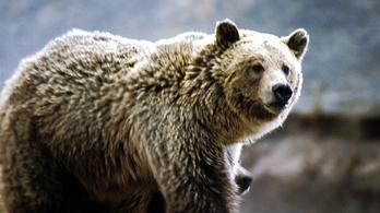 Motort grizzly-nek