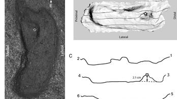 Az amerikai kontinens legrégebbi lábnyomát találták meg Chilében